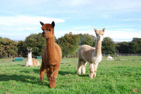 Lucky Tails Alpacas - Farm entry ticket for one adult and one child with alpaca meet and greet and Santas Grotto - Save 46%