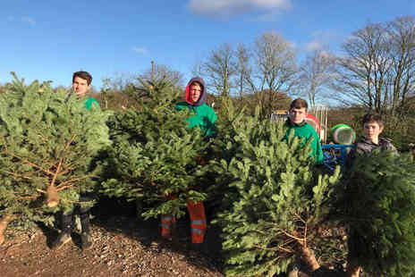 Ty Cerrig Christmas Tree Farm - Christmas tree farm trip including one pre cut 8 To 9ft Norway Spruce tree and hot drinks for up to four people - Save 61%