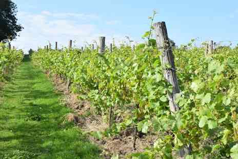 Sedlescombe Organic Vineyard - Sussex vineyard tour and lunch and overnight stay for Two - Save 24%