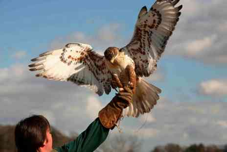 Raptor World - Two Hour Birds of Prey Experience - Save 60%
