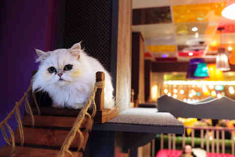 Kitty Cafe - Afternoon tea for two people - Save 58%