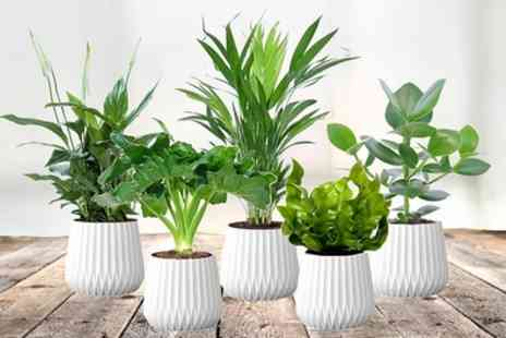 Groupon Goods Global GmbH - Five Air Purifying Plants - Save 0%