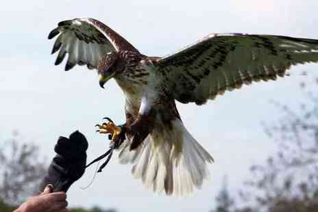 Yarak Birds of Prey Centre - Birds of prey experience for one person - Save 57%