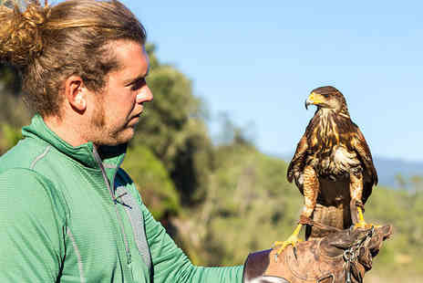 Herrings Green Activity Farm - Three hour Raptor and Reload bird handling and target shooting experience for one - Save 84%