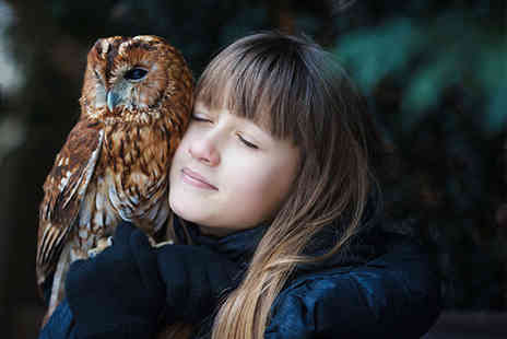 Bridlington Birds of Prey & Animal Park - Owl handling experience and park entry - Save 40%