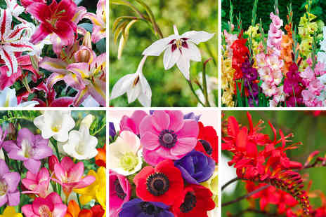 Thompson & Morgan - Summer bulb collection - Save 47%