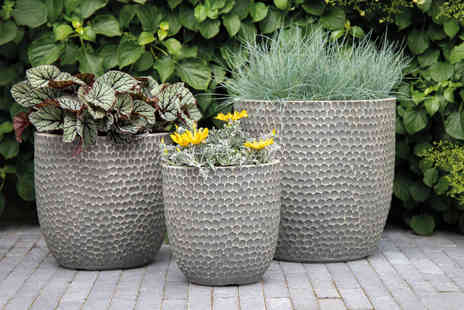 CJ Offers - Pack of three Minnesota egg planters - Save 55%