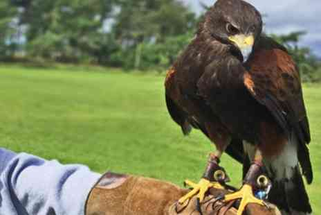 Falconry Days - Half Day Falconry Experience for One - Save 67%