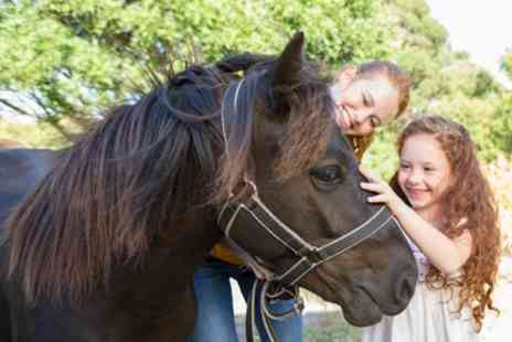 Hillside Shire Horse and Animal Sanctuary - Animal Sanctuary Entry for Up to Four - Save 38%