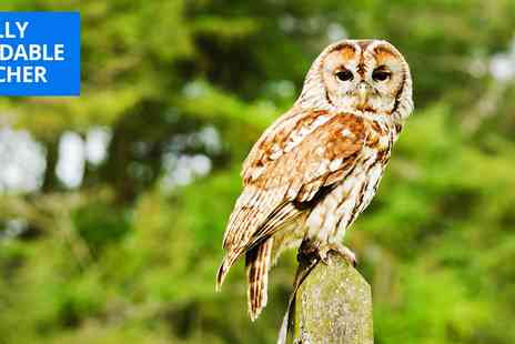 Yarak Birds of Prey - Owl encounter experience - Save 46%