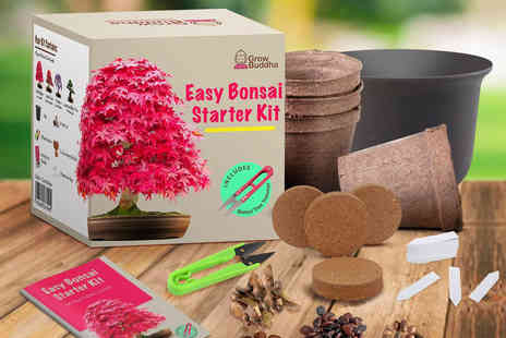 Grow Buddha - Grow Your Own Bonsai Tree kit including biodegradable pots, seeds, soil discs, clippers - Save 47%