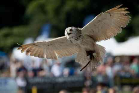 Hawkeye Falconry - Two Hour Birds of Prey Experience for One or Two - Save 66%