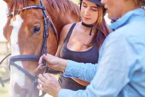 The Sussex Riding School - 2.5 Hour Horse Trekking for Up to Six - Save 33%