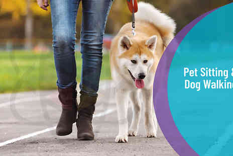 One Education - Pet Sitting and Dog Walking Online Diploma - Save 98%