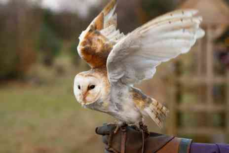Joes Bows - One Hour Flying Owls Experience for One, Two or Four - Save 43%