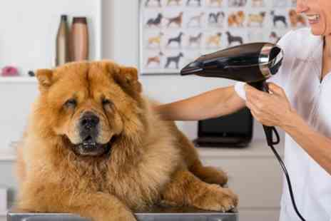 Henry and Co - Dog Wash and Blow Dry for Small, Medium or Large Breed - Save 44%