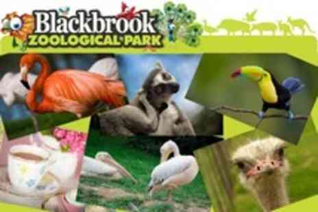 Blackbrook Zoological Park - Blackbrook Zoological Park for Admission Plus Cream Tea For Two - Save 61%
