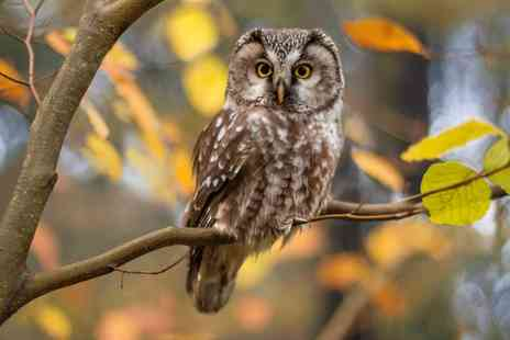 Yarak Birds of Prey Centre - Owl encounter experience for one person - Save 46%
