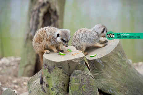 Bridlington Birds of Prey & Animal Park - Meet the meerkat experience and park entry for two people - Save 0%