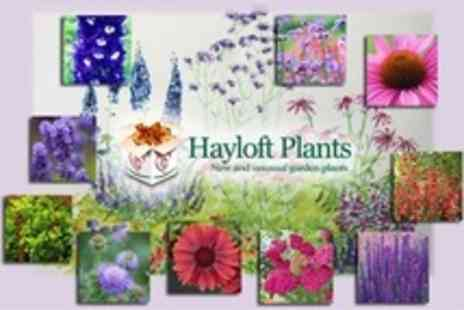 Hayloft Plants - Country Garden Flower Sets With Ten Plants - Save 50%