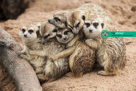 Hoo Farm Animal Encounters - One hour meerkat experience for two people - Save 61%