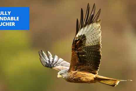 Yarak Birds of Prey - Birds of prey flying & handling experience in Devon - Save 13%