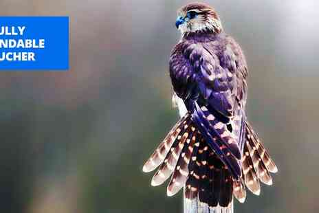 Imperial Bird Of Prey Academy - Falconry experience for 2 in Essex - Save 50%
