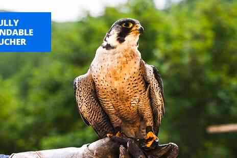 Rutland Falconry and Owl Centre - 2 hour birds of prey experience in Oakham - Save 72%