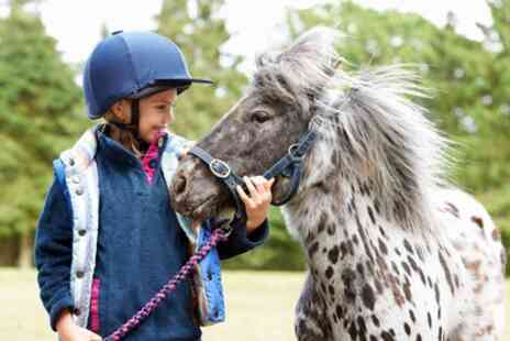 Suzies Alpacas - Shetland Pony Experience for One or Two - Save 0%