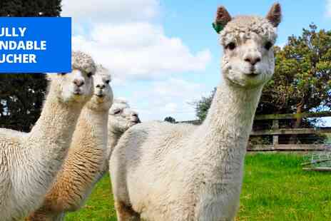 Birds of Prey Centre - Alpaca walk & cream tea for 2 - Save 67%
