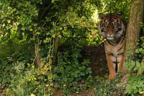 South Lakes Safari Zoo - Big Cat Encounter with Day Admission - Save 0%