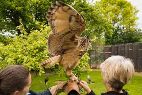 West Sussex Falconry - Half Day Falconry Experience with Hot drink and Homemade Cake - Save 57%