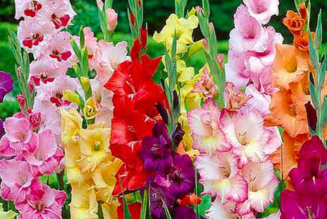 Thompson & Morgan - Collection of 425 summer flowering bulbs - Save 0%