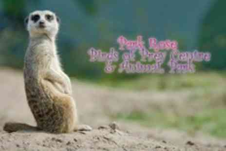 Park Rose Birds - Meet The Meerkats Experience For One - Save 83%
