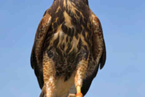 Adventure Events 001 - Three Hour Falconry Experience - Save 51%