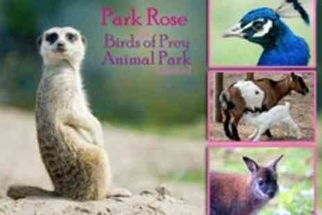 Park Rose Birds of Prey - Family Admission to Park Rose Birds of Prey and Animal Park - Save 63%