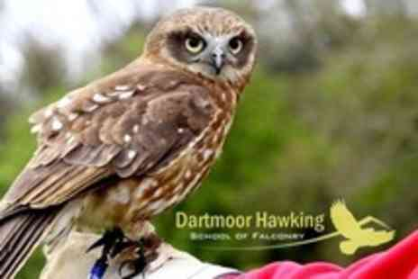 Dartmoor Hawking - Two Hour Interactive Experience - Save 62%