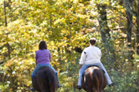 North Laithes Equine - Four Horse Riding Lessons - Save 54%
