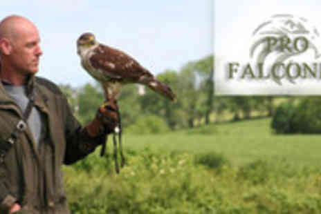 Pro Falconer - An amazing birds of prey experience - Save 68%