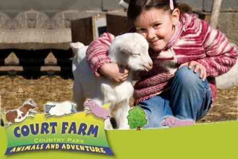 Court Farm Country Park - Family Entry To Court Farm Country Park  - Save 50%