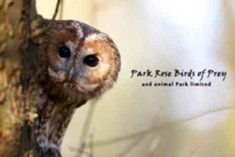 Park Rose Birds of Prey - Family Admission to Spooky Night Time Owl Walk - Save 60%