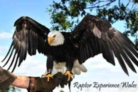 Raptor Experience Wales - Three Falconry Experience Hours - Save 71%