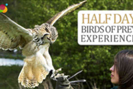 The English School of Falconry - Half Day Birds of Prey Experience - Save 77%