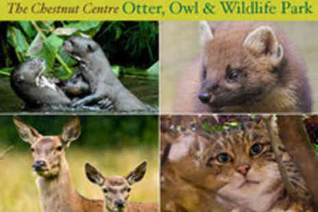The Chestnut Centre - Family Ticket Otter Owl and Wildlife Park - Save 52%