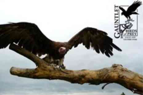 Gauntlet Birds of Prey Eagle and Vulture Park - Family Admission With Drinks - Save 68%