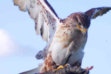 Eagle Eye Falconry - Visit of Five Birds of Prey to Childs Party - Save 57%