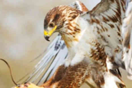 Yarak Birds of Prey Centre - Half Day Bird of Prey Handling Experience - Save 61%