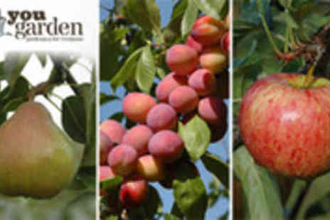 YouGarden.com - A mini orchard of apples, plums and pears - Save 56%