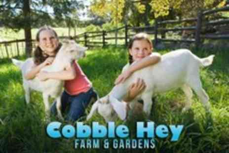 Cobble Hey Farm and Gardens - Family of Four Admission - Save 40%