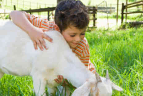 Gower Heritage Centre - Animal Care Experience Day - Save 50%